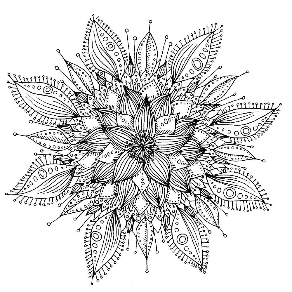 fleur-helene-seinera