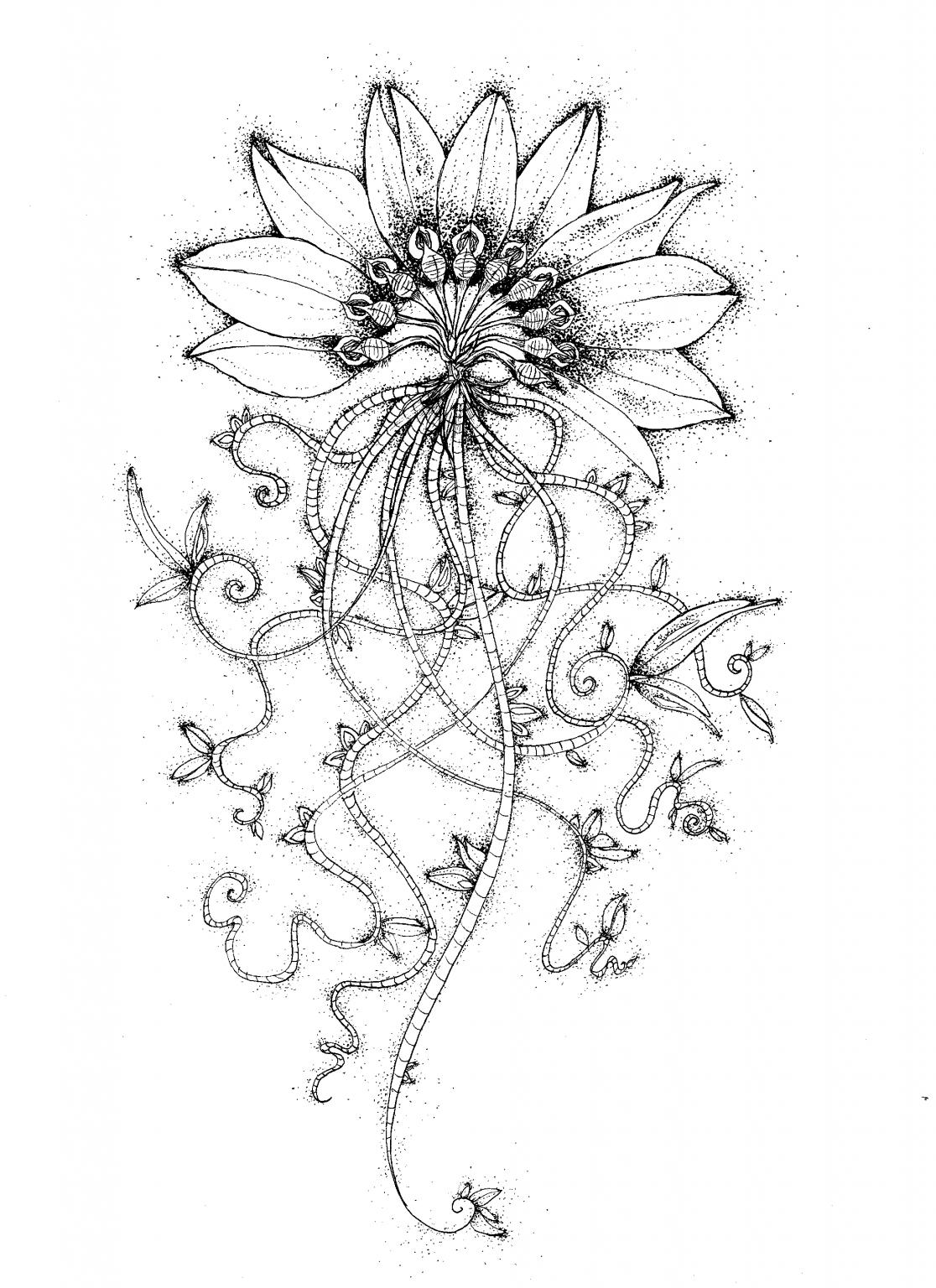 hybridation-végétal-seinera-1