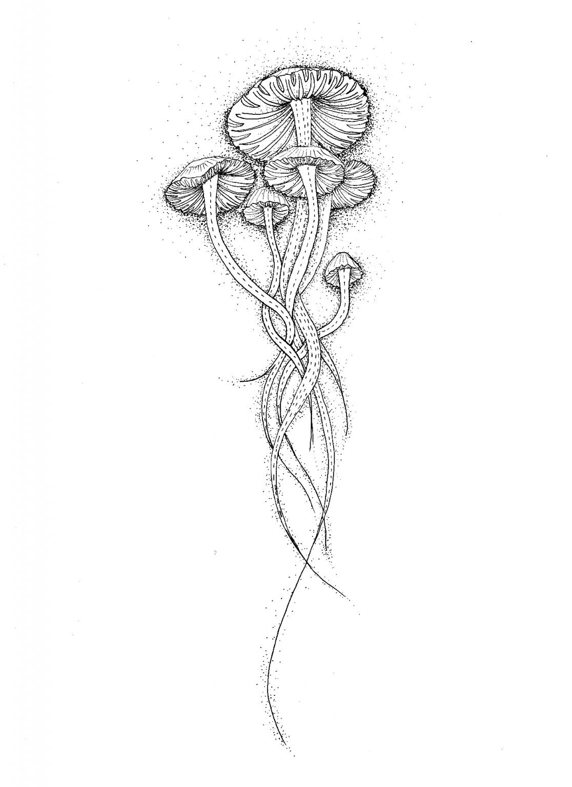 hybridation-végétal-seinera-3
